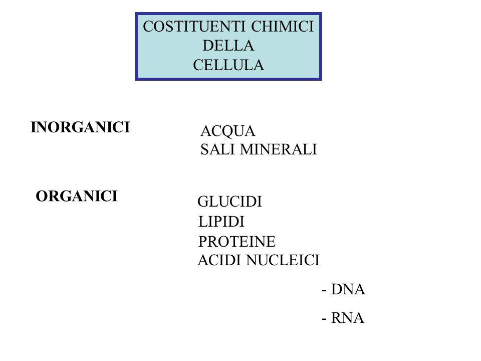 cellula organuli strutture sopra-molecolari macromolecole molecole organiche piccole