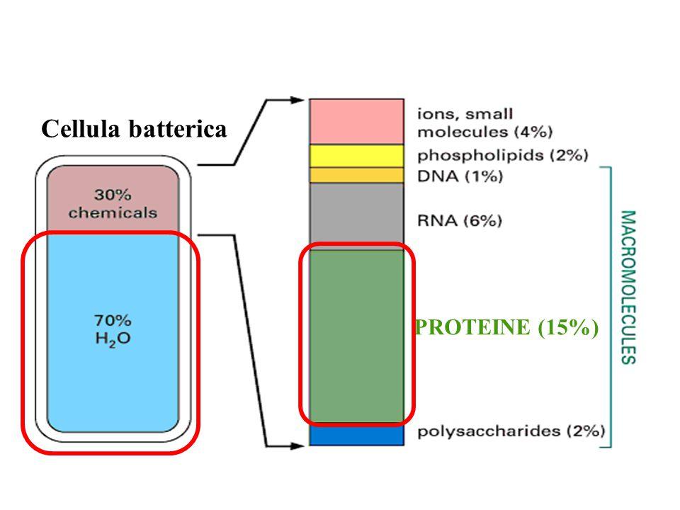 COSTITUENTI CHIMICI DELLA CELLULA LIPIDI ACQUA PROTEINE ACIDI NUCLEICI - DNA - RNA INORGANICI SALI MINERALI ORGANICI GLUCIDI