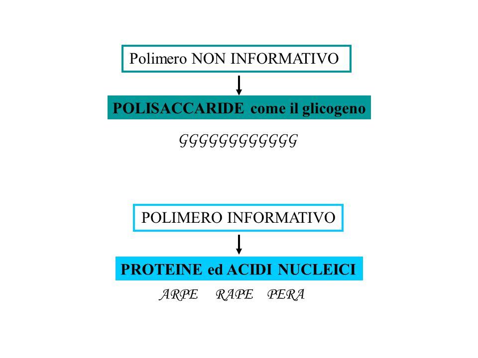POLIMERI = grandi molecole costituite dall'unione di molte subunità identiche o simili nella cellula, tra cellule, tra individui, tra specie MONOMERI