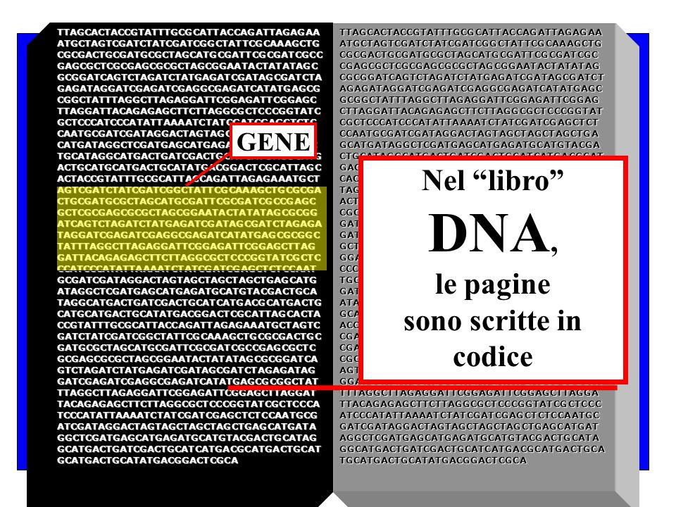 Le istruzioni biologiche (o progetto interno della cellula) sono contenute nel DNA. L'informazione biologica è contenuta in una sequenza di 4 nucleoti
