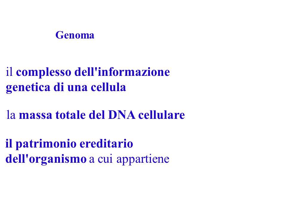 Come è organizzata l'informazione? Una enorme quantità di informazione dentro ad ogni singola cellula: il GENOMA Aprendo ogni libro si trovano brani c