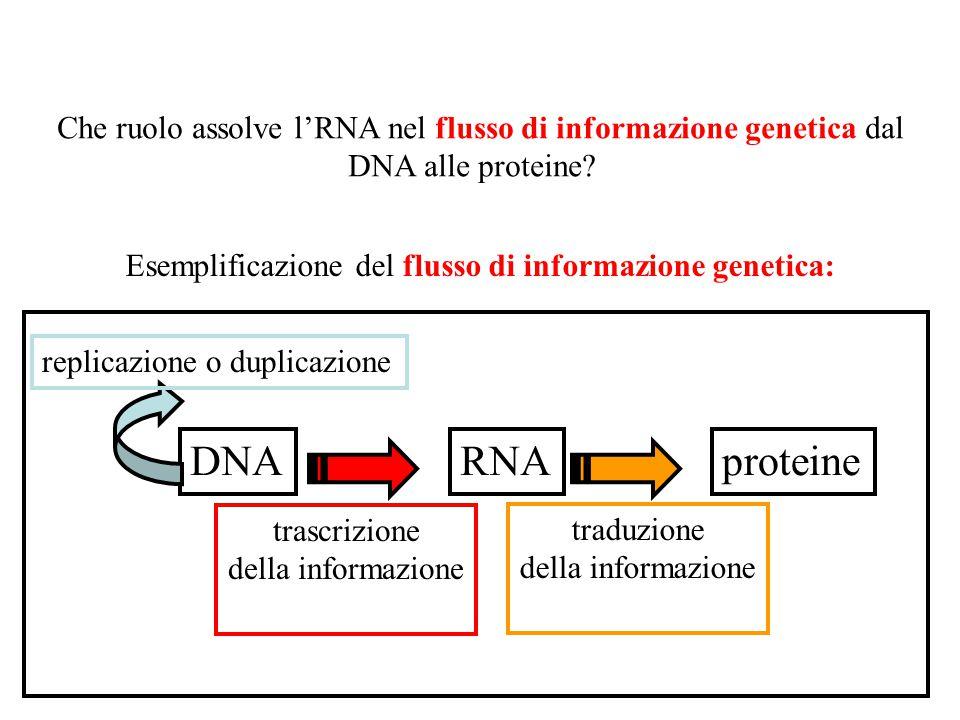"""I geni sono le unità responsabili delle caratteristiche ereditarie. Un carattere è in generale un aspetto dell'oggetto che osserviamo. Desamparados-""""A"""