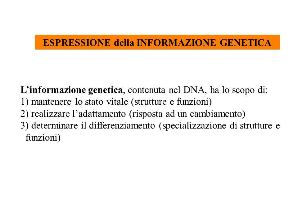 ESPRESSIONE DELLA INFORMAZIONE BIOLOGICA dal progetto alla costruzione proteina DNA