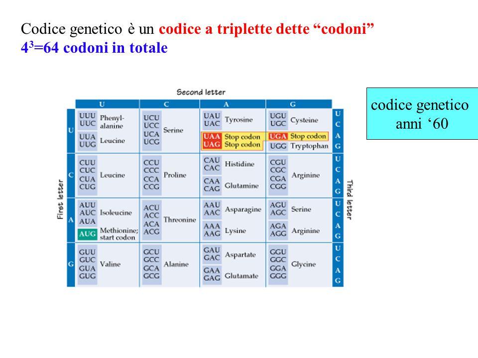 Promotore RNA polimerasi Direzione della trascrizione TRASCRIZIONE PROMOTORE