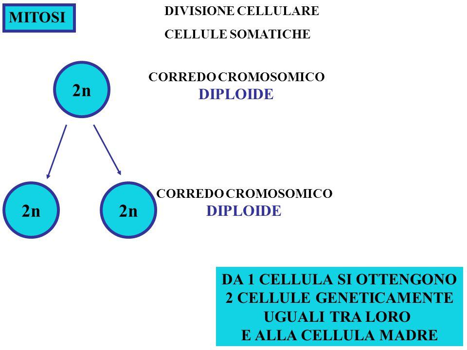 Con eccezione delle cell. germinali, le cellule umane hanno due copie di ognuno dei cromosomi: uno di origine materna ed una di origine paterna 23 cop
