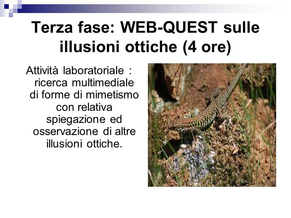 Terza fase: WEB-QUEST sulle illusioni ottiche (4 ore) Attività laboratoriale : ricerca multimediale di forme di mimetismo con relativa spiegazione ed