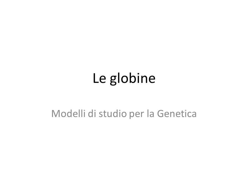 Le globine Modelli di studio per la Genetica
