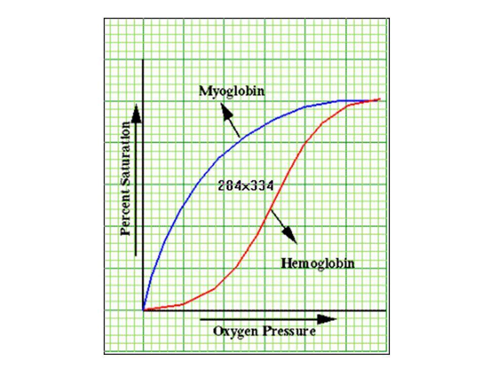 Emoglobina http://www.rcsb.org/pdb/101/motm.do?momID=41 http://www.pianetachimica.it/mol_mese/mol_mese _2003/05_Emoglobina/emoglobina_1_ita.html