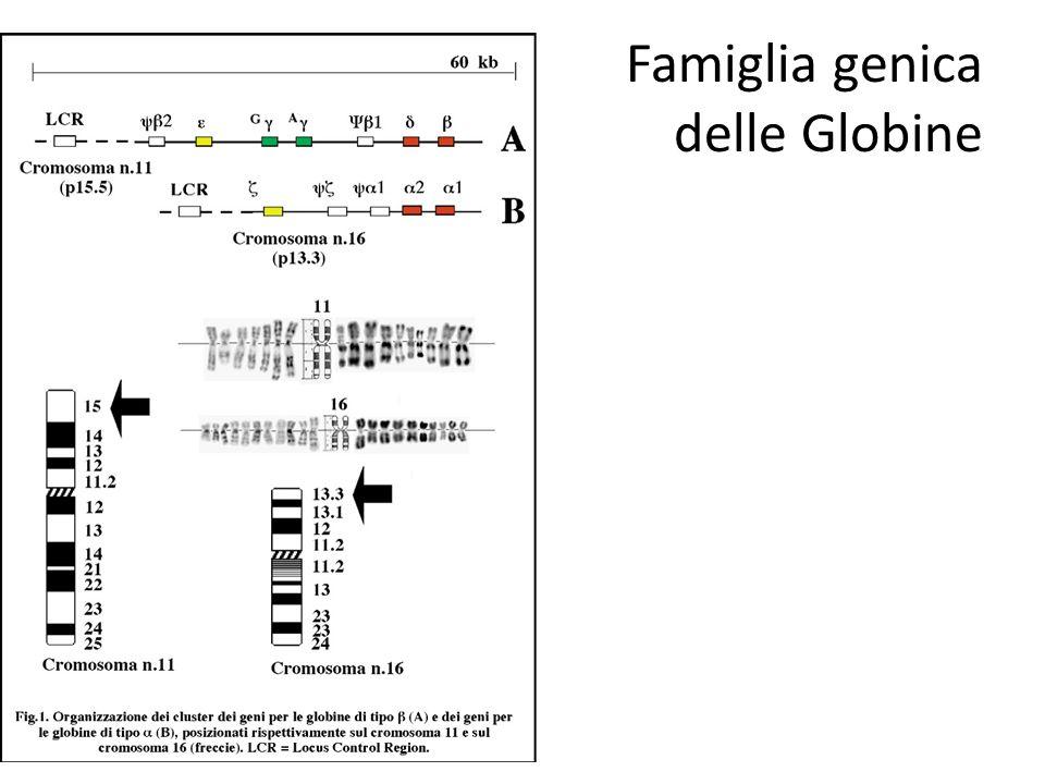 Famiglia genica delle Globine