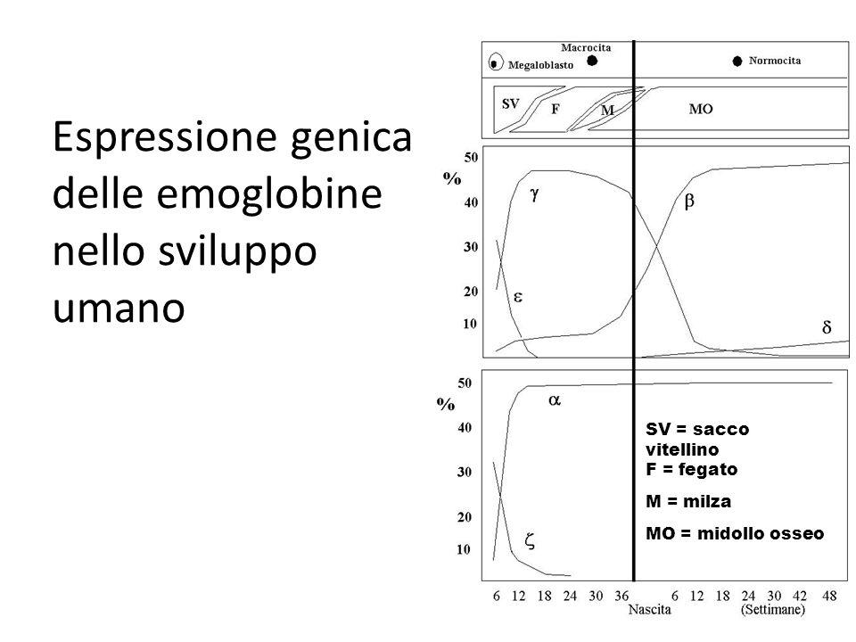 SV = sacco vitellino F = fegato M = milza MO = midollo osseo Espressione genica delle emoglobine nello sviluppo umano