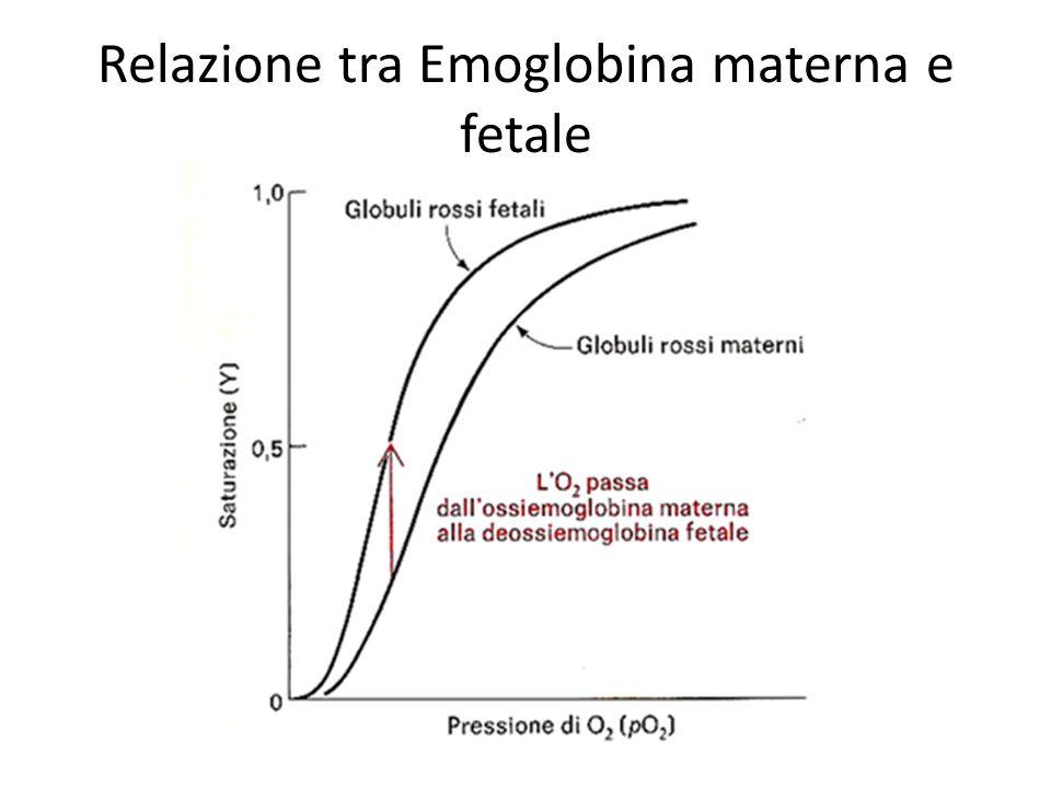 Relazione tra Emoglobina materna e fetale