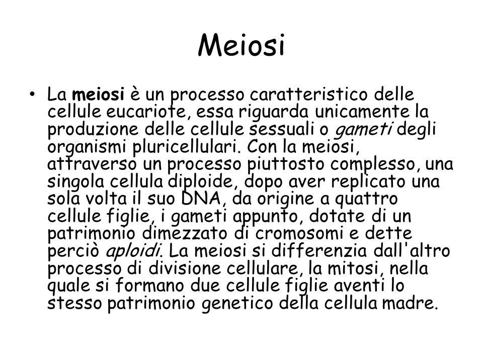 Meiosi La meiosi è un processo caratteristico delle cellule eucariote, essa riguarda unicamente la produzione delle cellule sessuali o gameti degli or