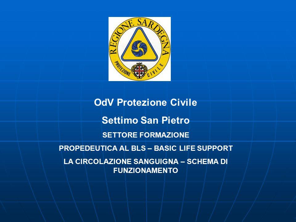 OdV Protezione Civile Settimo San Pietro SETTORE FORMAZIONE PROPEDEUTICA AL BLS – BASIC LIFE SUPPORT LA CIRCOLAZIONE SANGUIGNA – SCHEMA DI FUNZIONAMENTO