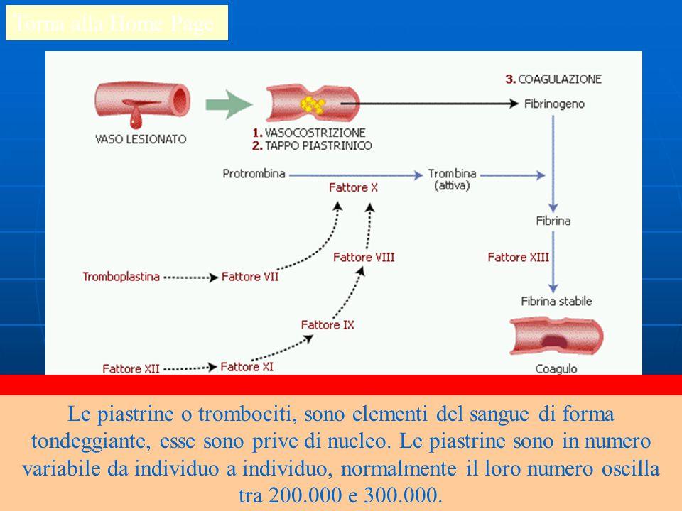La fuoriuscita di sangue da un vaso lesionato è tamponata attraverso un processo detto emostasi che avviene in tre fasi che servono a coagulare il sangue, a formare un tappo piastrinico e quindi ad occludere la lesione e bloccare la fuoriuscita del sangue.
