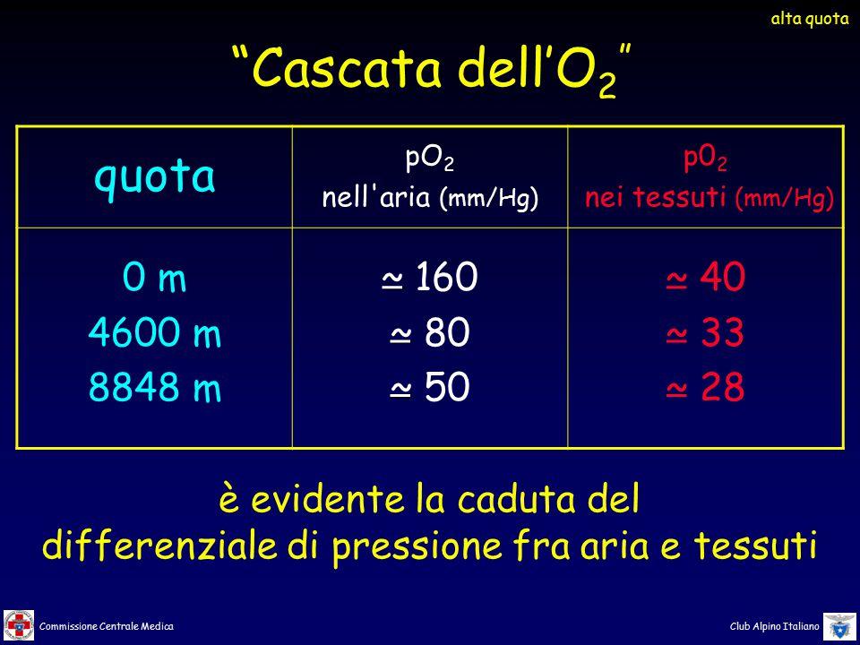 Commissione Centrale Medica Club Alpino Italiano quota pO 2 nell'aria (mm/Hg) p0 2 nei tessuti (mm/Hg) 0 m 4600 m 8848 m ~ 160 ~ 80 ~ 50 ~ 40 ~ 33 ~ 2