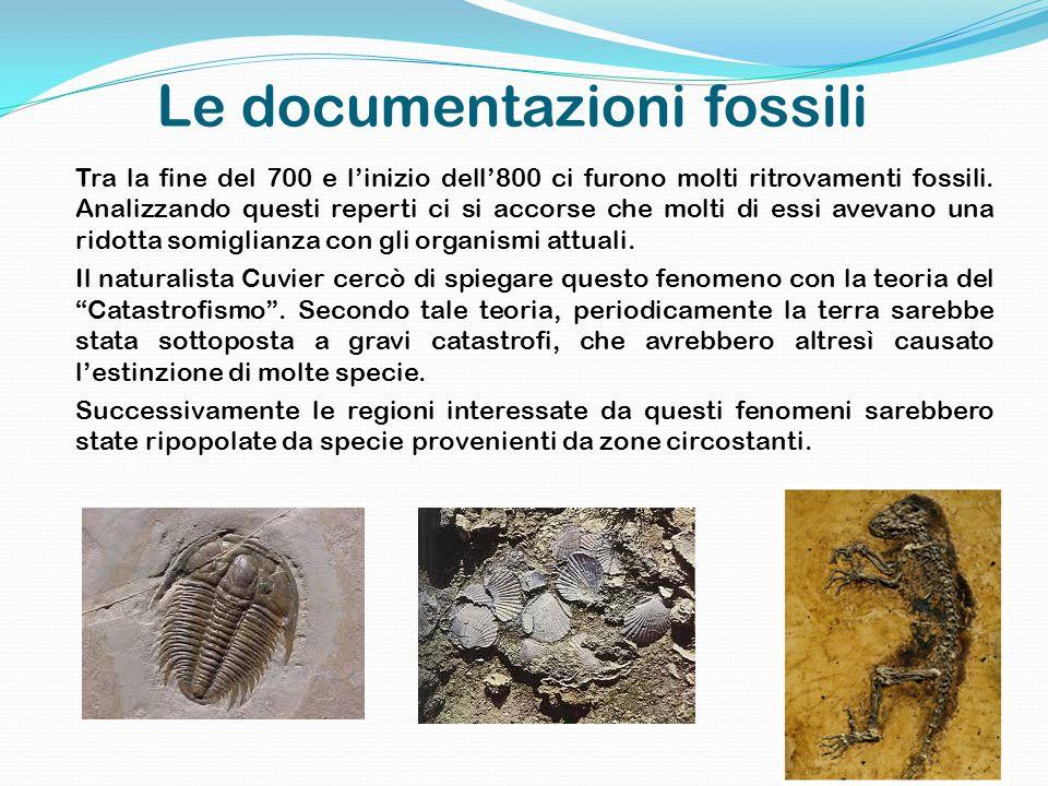 Le documentazioni fossili Tra la fine del 700 e l'inizio dell'800 ci furono molti ritrovamenti fossili.