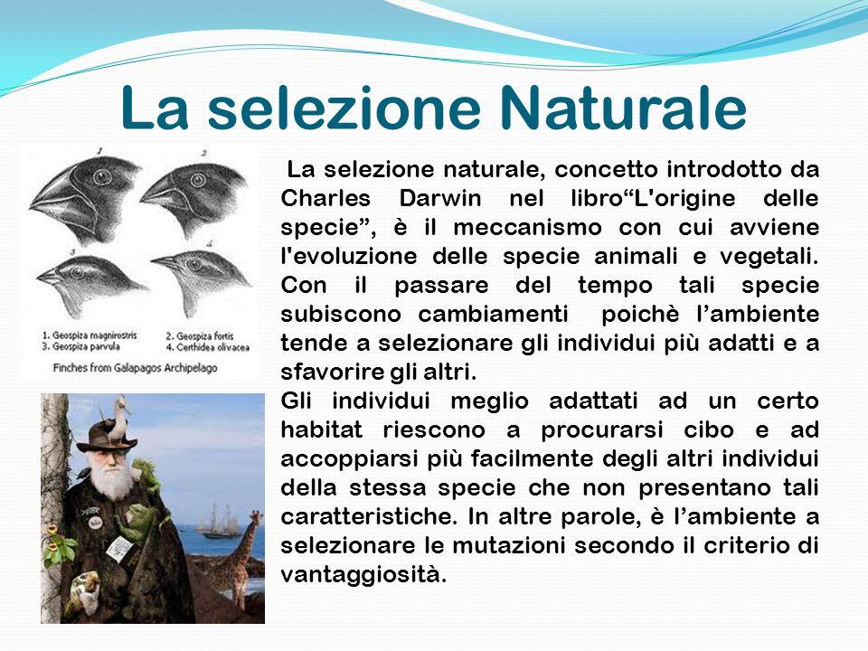 La selezione Naturale La selezione naturale, concetto introdotto da Charles Darwin nel libro L origine delle specie , è il meccanismo con cui avviene l evoluzione delle specie animali e vegetali.