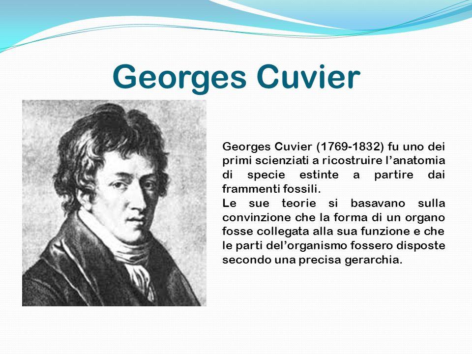 Georges Cuvier Georges Cuvier (1769-1832) fu uno dei primi scienziati a ricostruire l'anatomia di specie estinte a partire dai frammenti fossili.