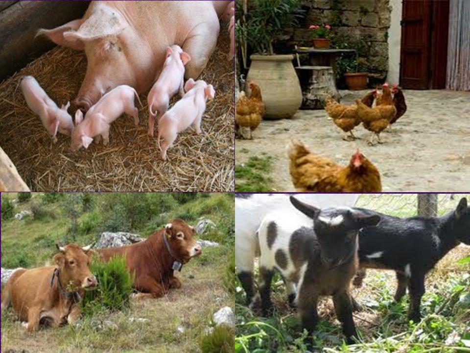 COSA SONO LE FATTORIE BIOLOGICHE? le fattorie biologiche sono aziende agricole, molto spesso a conduzione familiare, nel pieno della campagna. Col ter
