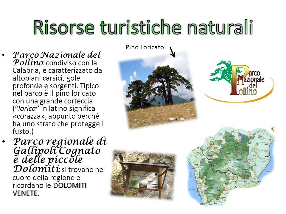 Parco Nazionale del Pollino : condiviso con la Calabria, è caratterizzato da altopiani carsici, gole profonde e sorgenti. Tipico nel parco è il pino l
