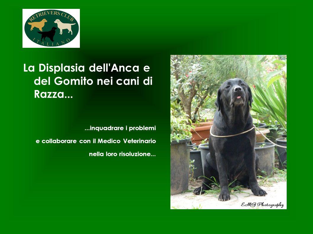 La Displasia dell'Anca e del Gomito nei cani di Razza......inquadrare i problemi e collaborare con il Medico Veterinario nella loro risoluzione...