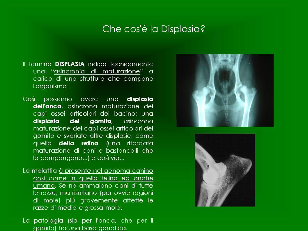 """Che cos'è la Displasia? Il termine DISPLASIA indica tecnicamente una """"asincronia di maturazione"""" a carico di una struttura che compone l'organismo. Co"""