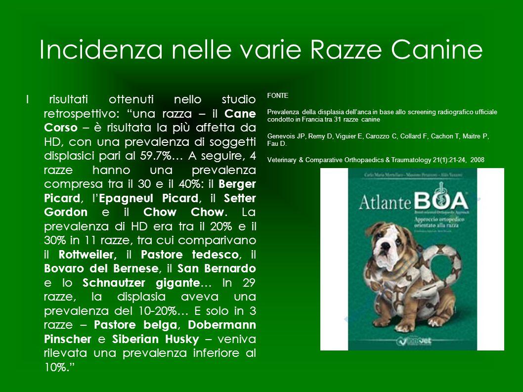 """Incidenza nelle varie Razze Canine I risultati ottenuti nello studio retrospettivo: """"una razza – il Cane Corso – è risultata la più affetta da HD, con"""