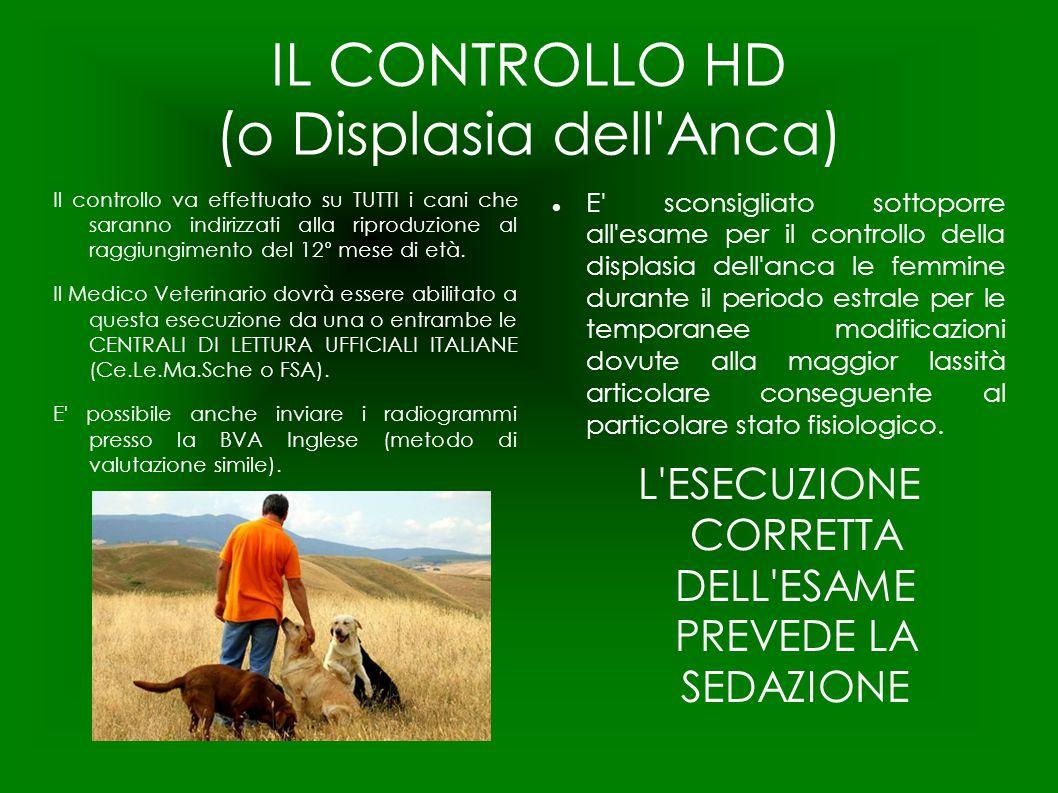 IL CONTROLLO HD (o Displasia dell'Anca) Il controllo va effettuato su TUTTI i cani che saranno indirizzati alla riproduzione al raggiungimento del 12°