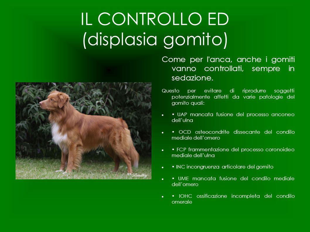 IL CONTROLLO ED (displasia gomito) Come per l'anca, anche i gomiti vanno controllati, sempre in sedazione. Questo per evitare di riprodurre soggetti p