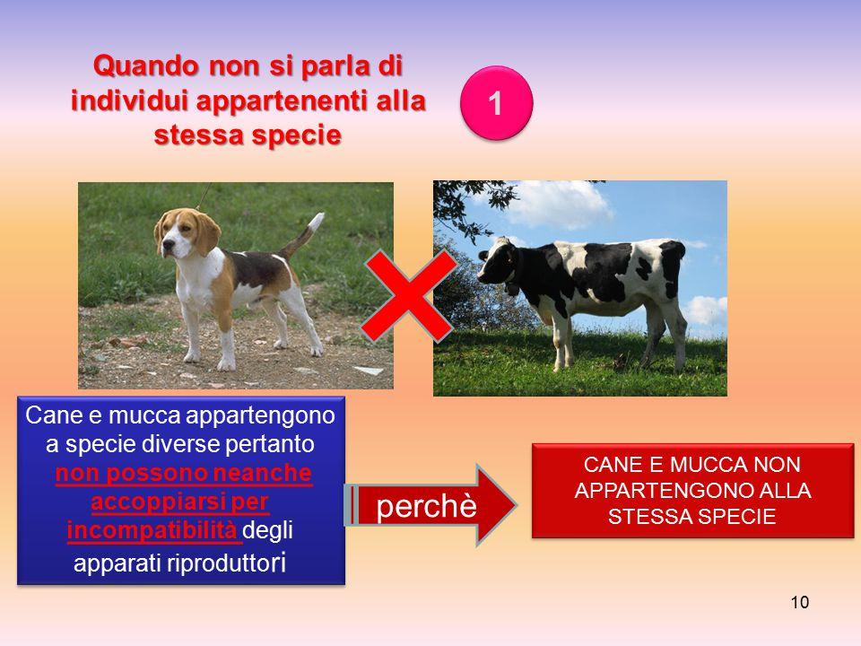 Quando non si parla di individui appartenenti alla stessa specie 10 Cane e mucca appartengono a specie diverse pertanto non possono neanche accoppiars