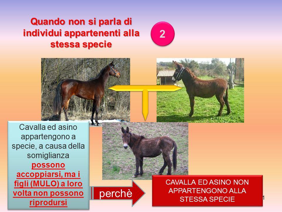 11 Quando non si parla di individui appartenenti alla stessa specie 2 2 Cavalla ed asino appartengono a specie, a causa della somiglianza possono acco