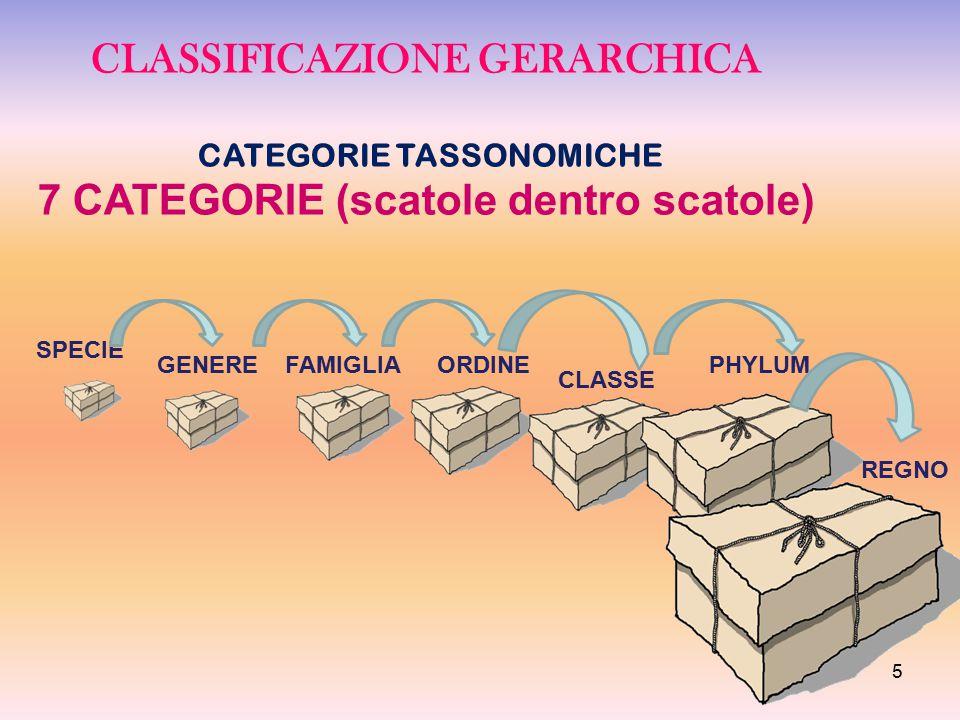 CLASSIFICAZIONE GERARCHICA CATEGORIE TASSONOMICHE 7 CATEGORIE (scatole dentro scatole) SPECIE GENEREFAMIGLIAORDINE CLASSE PHYLUM REGNO 5