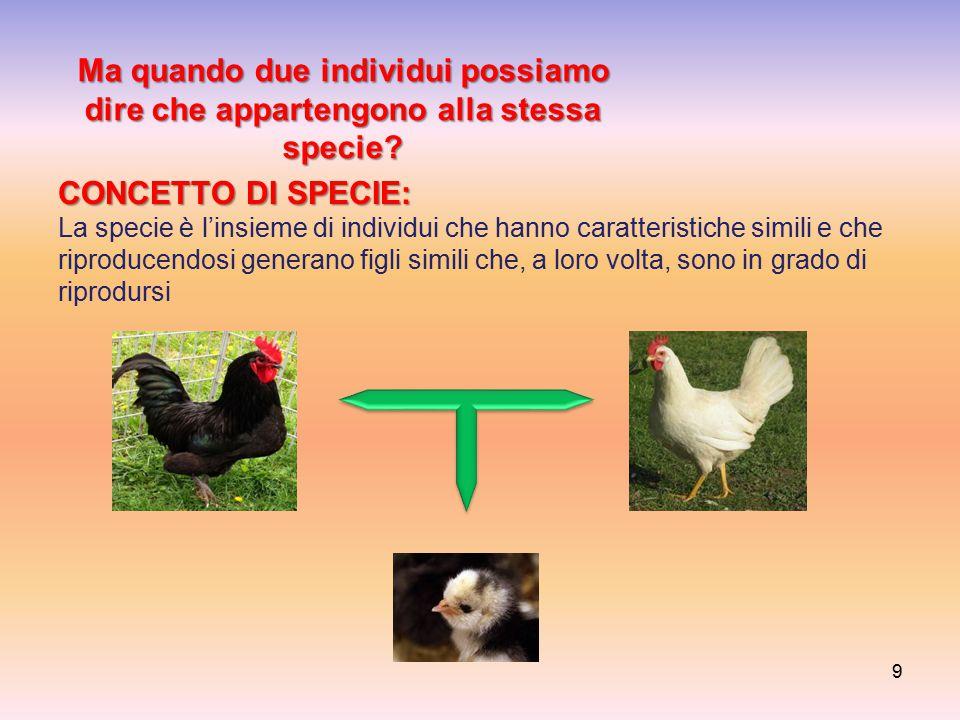 Ma quando due individui possiamo dire che appartengono alla stessa specie? CONCETTO DI SPECIE: CONCETTO DI SPECIE: La specie è l'insieme di individui
