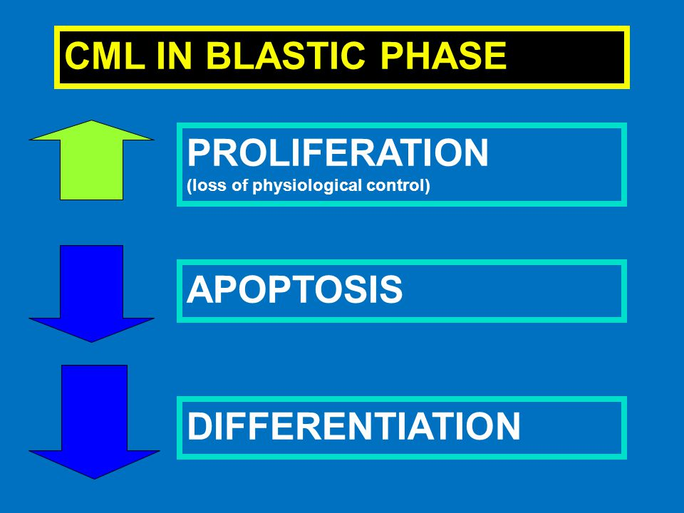 CML IN BLASTIC PHASE PROLIFERATION (loss of physiological control) APOPTOSIS DIFFERENTIATION