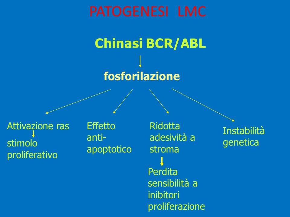 PATOGENESI LMC Chinasi BCR/ABL fosforilazione Attivazione ras stimolo proliferativo Effetto anti- apoptotico Ridotta adesività a stroma Perdita sensibilità a inibitori proliferazione Instabilità genetica
