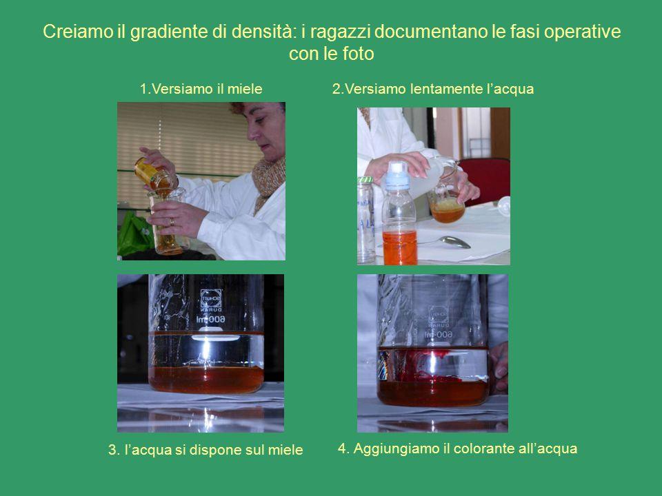 Creiamo il gradiente di densità: i ragazzi documentano le fasi operative con le foto 1.Versiamo il miele2.Versiamo lentamente l'acqua 3. l'acqua si di