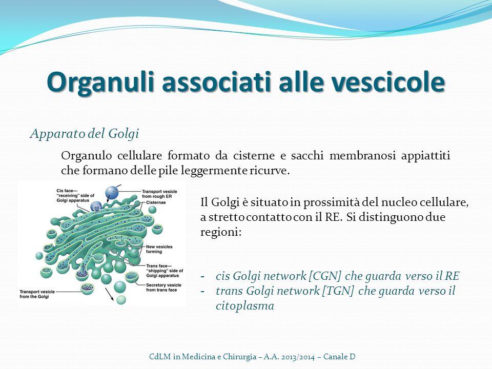 Organuli associati alle vescicole Apparato del Golgi CdLM in Medicina e Chirurgia – A.A. 2013/2014 – Canale D Organulo cellulare formato da cisterne e