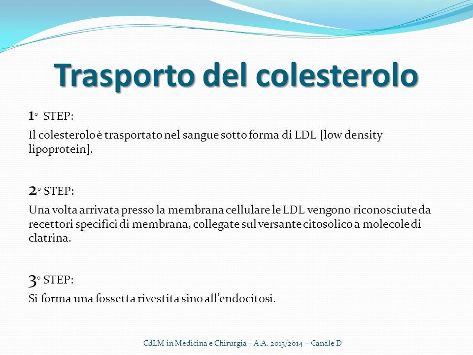 Trasportodelcolesterolo Trasporto del colesterolo 1 ° STEP: Il colesterolo è trasportato nel sangue sotto forma di LDL [low density lipoprotein]. 2 °