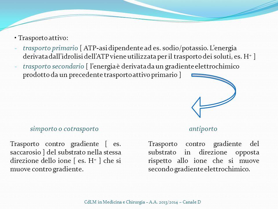 Trasporto attivo: - trasporto primario [ ATP-asi dipendente ad es. sodio/potassio. L'energia derivata dall'idrolisi dell'ATP viene utilizzata per il t