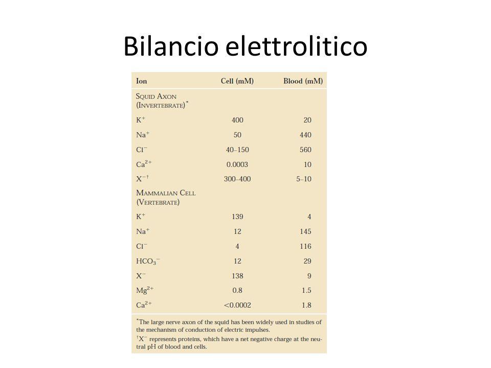 Bilancio elettrolitico