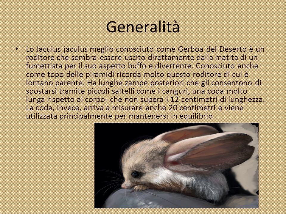 Generalità Lo Jaculus jaculus meglio conosciuto come Gerboa del Deserto è un roditore che sembra essere uscito direttamente dalla matita di un fumetti