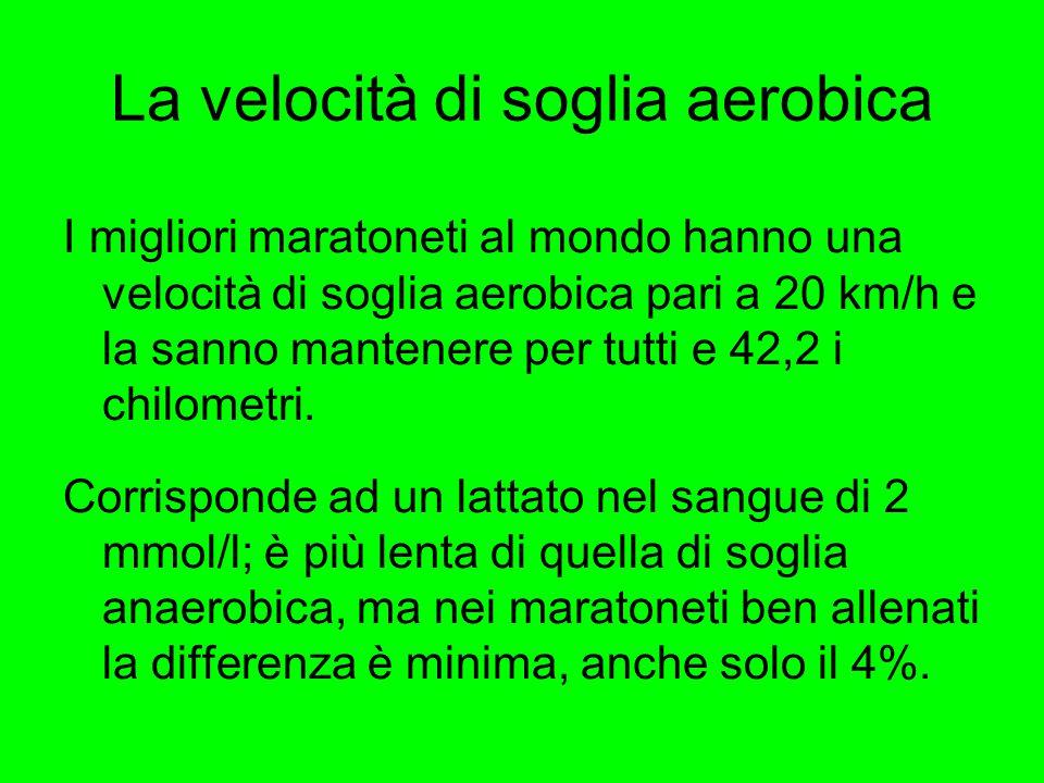 La velocità di soglia aerobica I migliori maratoneti al mondo hanno una velocità di soglia aerobica pari a 20 km/h e la sanno mantenere per tutti e 42,2 i chilometri.