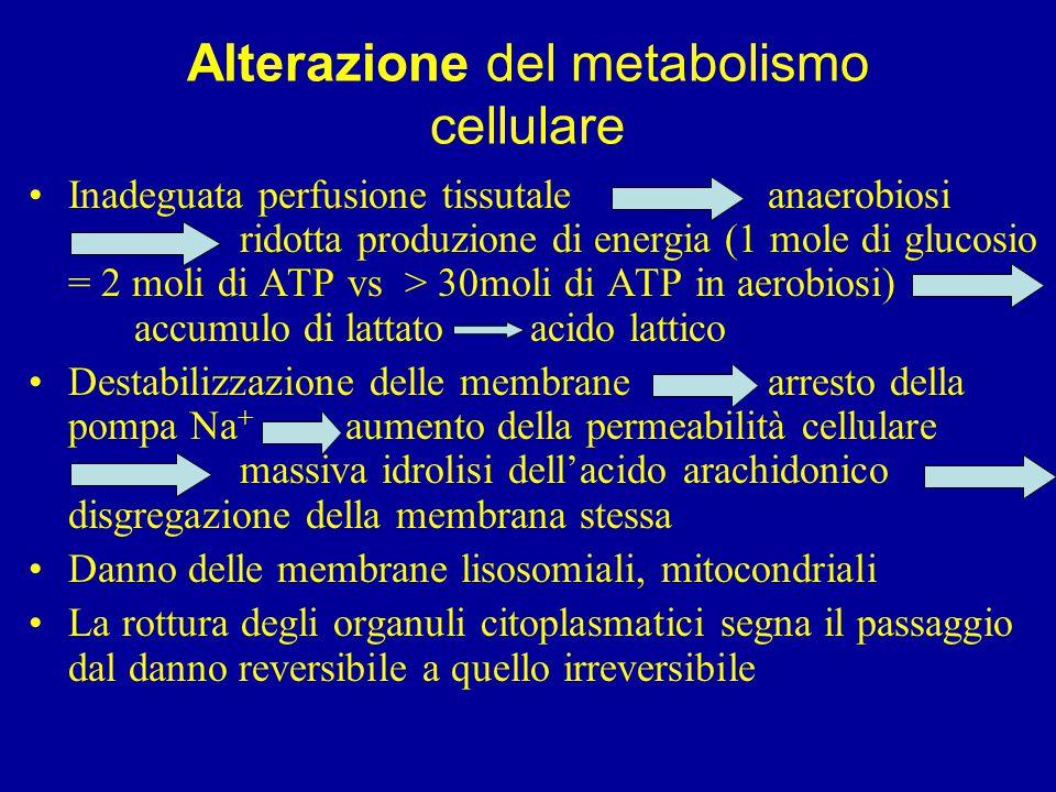 Alterazione del metabolismo cellulare Inadeguata perfusione tissutale anaerobiosi ridotta produzione di energia (1 mole di glucosio = 2 moli di ATP vs