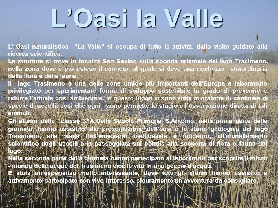 """L'Oasi la Valle L' Oasi naturalistica """"La Valle"""" si occupa di tutte le attività, dalle visite guidate alla ricerca scientifica. La struttura si trova"""