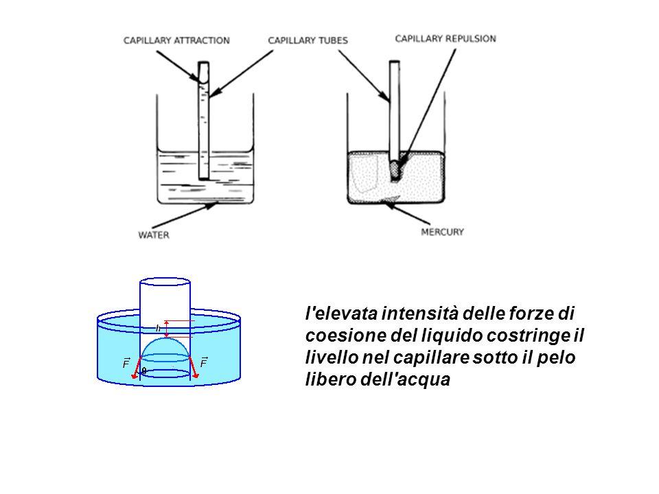 l'elevata intensità delle forze di coesione del liquido costringe il livello nel capillare sotto il pelo libero dell'acqua