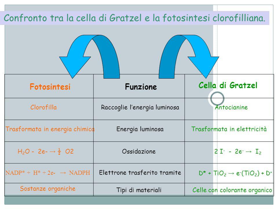 Confronto tra la cella di Gratzel e la fotosintesi clorofilliana.