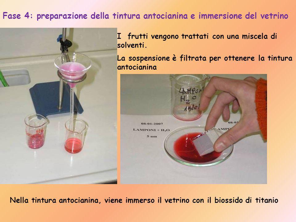 Fase 4: preparazione della tintura antocianina e immersione del vetrino I frutti vengono trattati con una miscela di solventi.