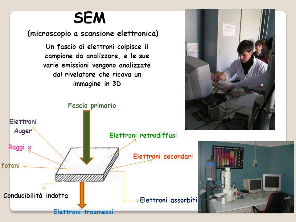 Fascio primario Elettroni retrodiffusi Elettroni secondari Elettroni Auger Raggi x fotoni Elettroni trasmessi Elettroni assorbiti Conducibilità indotta SEM (microscopio a scansione elettronica) Un fascio di elettroni colpisce il campione da analizzare, e le sue varie emissioni vengono analizzate dal rivelatore che ricava un immagine in 3D