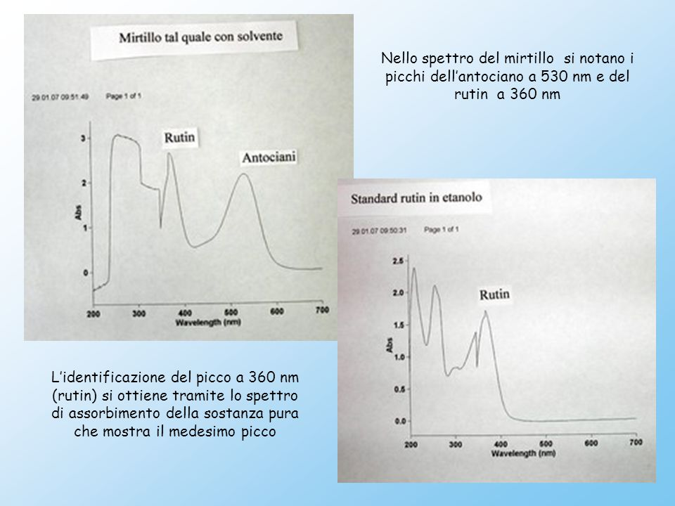 Nello spettro del mirtillo si notano i picchi dell'antociano a 530 nm e del rutin a 360 nm L'identificazione del picco a 360 nm (rutin) si ottiene tramite lo spettro di assorbimento della sostanza pura che mostra il medesimo picco
