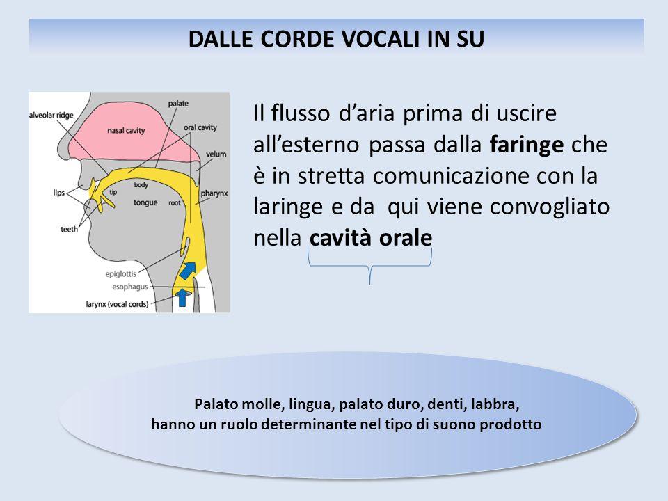 Il flusso d'aria prima di uscire all'esterno passa dalla faringe che è in stretta comunicazione con la laringe e da qui viene convogliato nella cavità